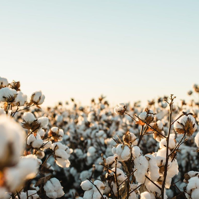Contract Cotton Picking